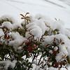 Snow fell Again in Texas on Feb 11, 2010