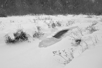 The Brook In Winter