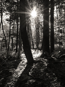 Sun & Shadow