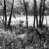 Summer On the Beaver Pond