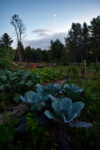Moon Over Cabbages