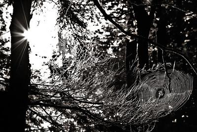 More Webs