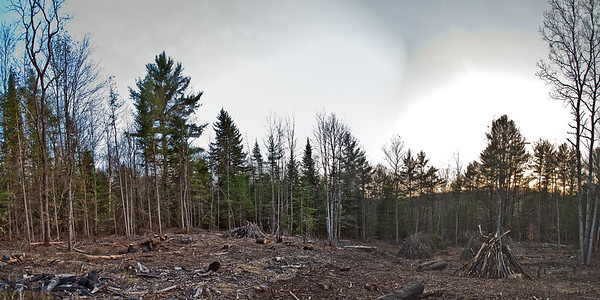 Tuesday, March 27, 2012  Taking Shape  This two shot panorama taken this evening shows the progress of the future horse pasture. Much brush has been eliminated through burning this past winter and plenty remains to pile and burn before the stumps can be removed. But for the time and effort invested, the progress is measurable and satisfactory.