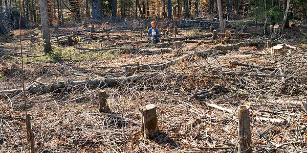 Saturday, March 17, 2012  Saint Patrick's Day  Work continues in the lower pasture area with remaining trees being felled. Stumps are left high to facilitate removal. Here it is mid-March with no snow and warm weather, this is easily the earliest spring I've experienced. Even warmer temperatures are coming this week.