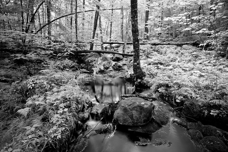 The Brook In the Woods