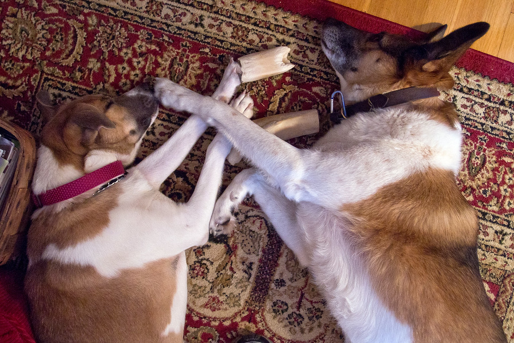 A Bone (or two) To Pick