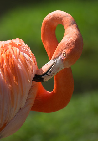 Flamingo Pruning