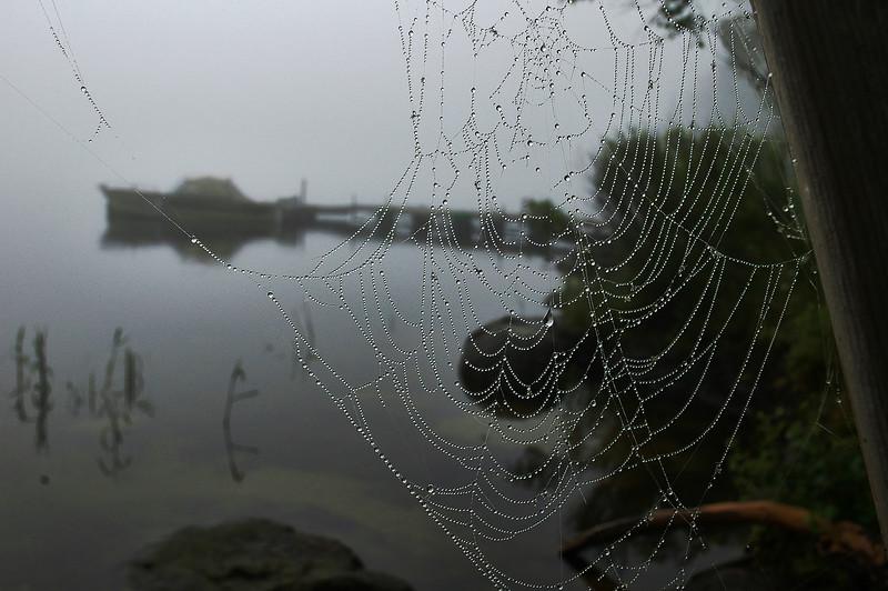 web o dew