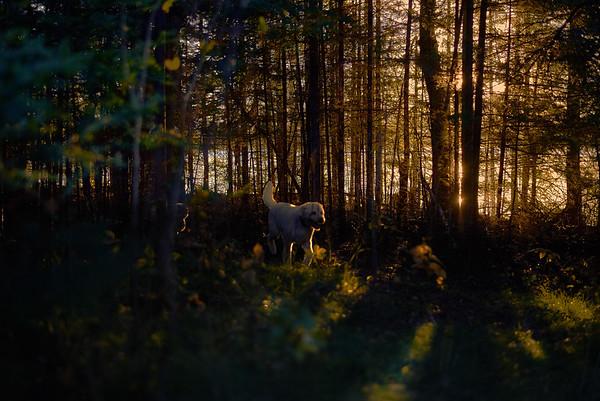 twilight through the trees