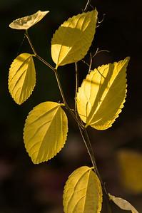Fall Colors: Saturday afternoon walk around my yard. Nov. 9, 2013
