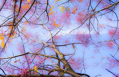 Fall Colors: Saturday afternoon walk around my yard. Looking up. Nov. 9, 2013
