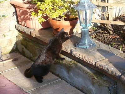 """Are those pesky squirrels here again"""