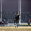 Dubai World Cup -Morning works 3/24/17, photo by Mathea Kelley/Dubai Racing Club<br /> Arrogate Dubai World Cup