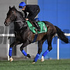 Dubai World Cup -Morning works 3/24/17, photo by Mathea Kelley/Dubai Racing Club<br /> Jack Hobbs, Dubai Sheema Classic