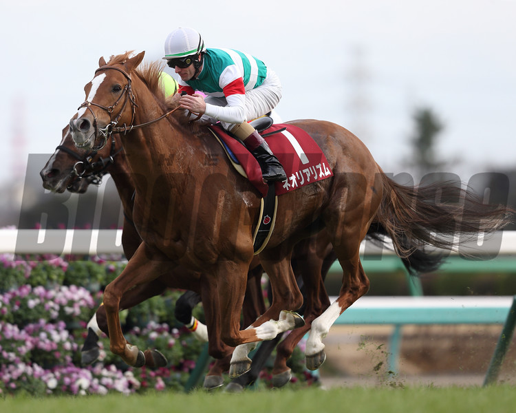 Neorealism wins the Nakayama Kinen (G2) at Nakayama on February 26, 2017
