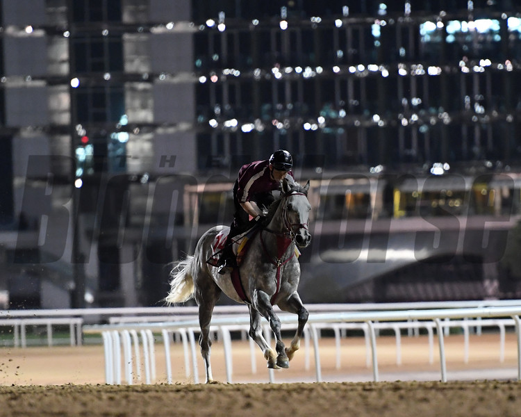 Dubai World Cup -Morning works 3/24/17, photo by Mathea Kelley/Dubai Racing Club Lani, Dubai World Cup