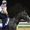 Dubai World Cup -Morning works 3/22/17, photo by Mathea Kelley/Dubai Racing Club<br /> Arrogate, Dubai World Cup