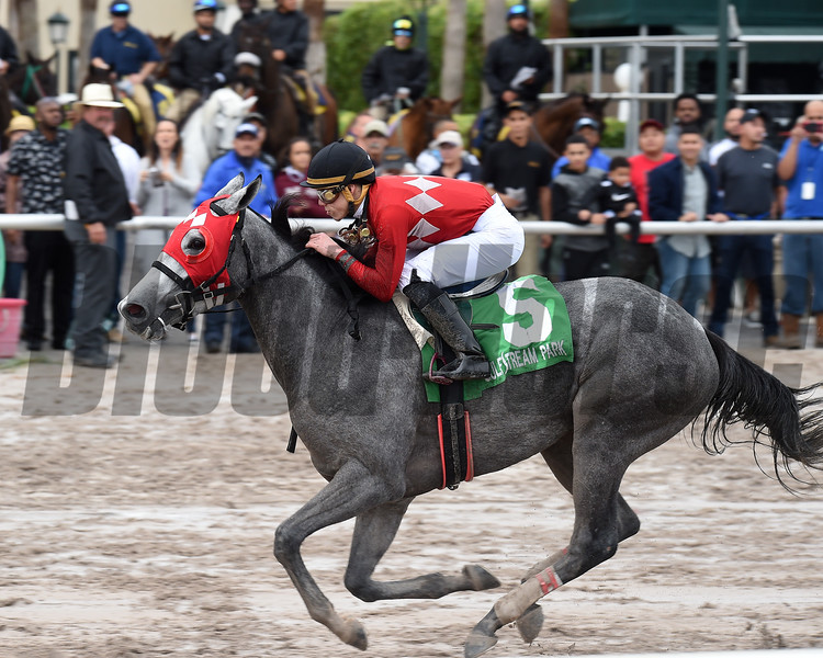 Jaguaryu wins the 2017 Copa Dama del Caribe<br /> Coglianese Photos/Lauren King