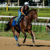 Exercise rider Dana Barnes takes Travers Stakes entrant for a gallop around the main track at the Saratoga Race Course Wednesday Aug. 23, 2017 in Saratoga Springs, N.Y.  (Skip Dickstein