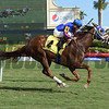 Speed Star - Maiden Win, Gulfstream Park, December 24, 2017<br /> Coglianese Photos/Leslie Martin