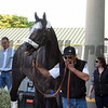 Arrogate - Gulfstream Park, January 24, 2017<br /> Coglianese Photos/Leslie Martin