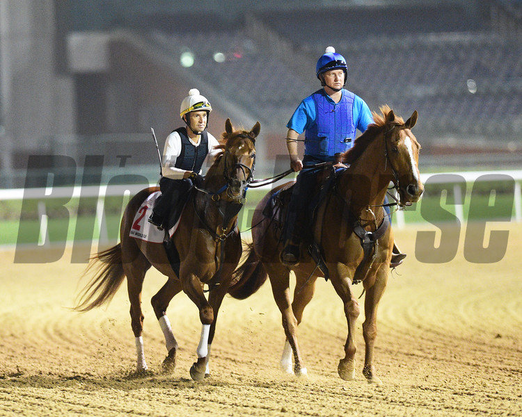 Dubai World Cup -Morning works 3/22/17, photo by Mathea Kelley/Dubai Racing Club<br /> Gun Runner, Dubai World Cup