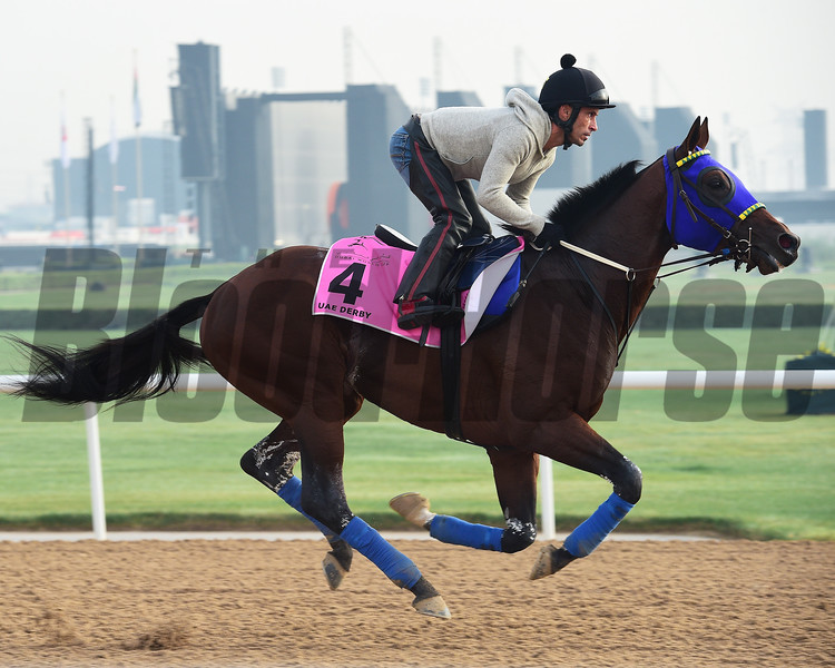 Dubai World Cup -Morning works 3/23/17, photo by Mathea Kelley/Dubai Racing Club<br /> He Runs Away, UAE Derby