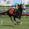 Gidu - Maiden Win, Gulfstream Park, December 23, 2017<br /> Coglianese Photos/Lauren King