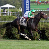 Bar of Gold wins the 2017 Yaddo Stakes<br /> Coglianese Photos/Taylor Ejdys