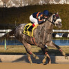 El Areeb wins the 2017 Withers<br /> Coglianese Photos