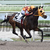 Curlin's Approval wins the 2017 Royal Delta Stakes<br /> Coglianese Photos/Lauren King