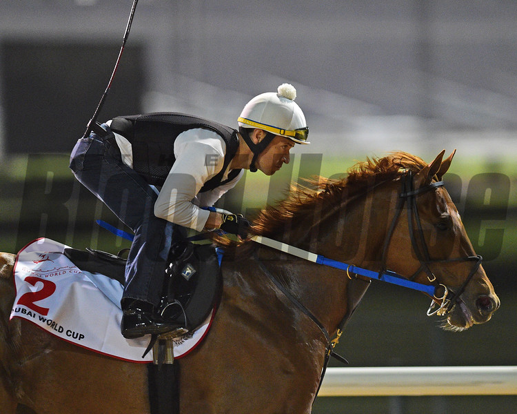 Dubai World Cup -Morning works 3/22/17, photo by Mathea Kelley/Dubai Racing Club<br /> Gun Runner, Dubai World Cup