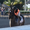 Imperial Hint wins the 2017 Smile Sprint<br /> Coglianese Photos/Lauren King
