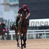 Dubai World Cup -Morning works 3/24/17, photo by Mathea Kelley/Dubai Racing Club<br /> Highland Reel, Dubai Sheema Classic