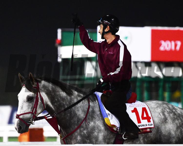 Dubai World Cup -Morning works 3/23/17, photo by Mathea Kelley/Dubai Racing Club<br /> Lani, Dubai World Cup