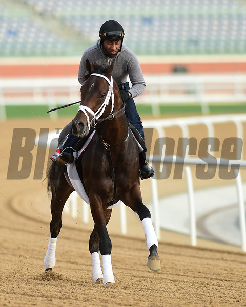 Dubai World Cup -Morning works 3/22/17, photo by Mathea Kelley/Dubai Racing Club<br /> Neolithic, Dubai World Cup