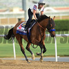 Dubai World Cup -Morning works 3/20/27, photo by Mathea Kelley/Dubai Racing Club