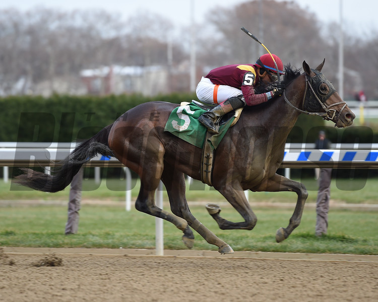 Catholic Boy wins the 2017 Remsen<br /> Coglianese Photos/Susie Raisher