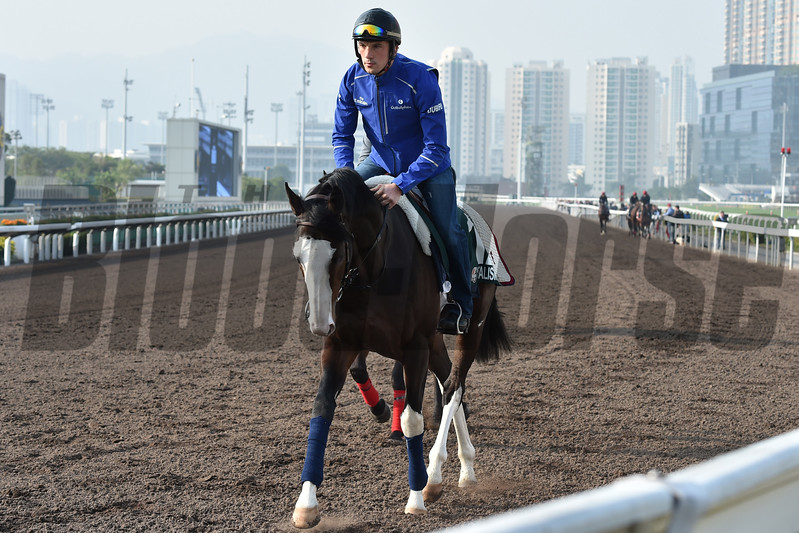 Talismanic - Sha Tin Racecourse - December 9, 2017<br /> Katsumi Saito Photo