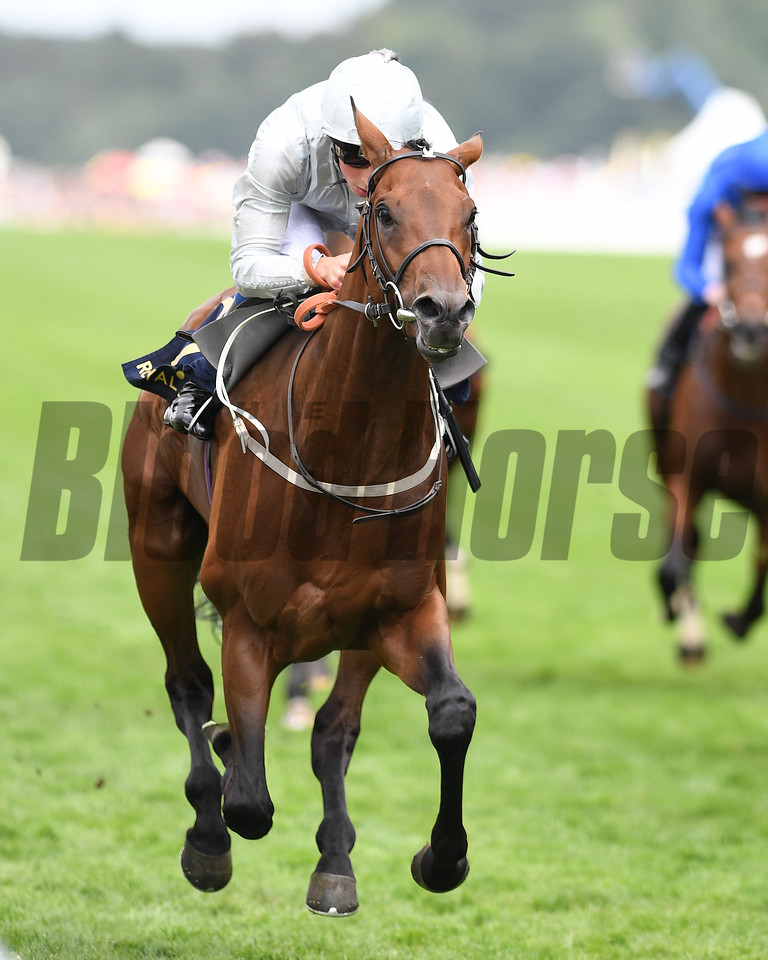 Permian, Wimmian Buick, win the King Edward VII Stakes, Royal Ascot, Ascot UK, 6/23/17, photo by Mathea Kelley