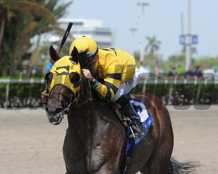 Soutache wins the Florida Sire In Reality Stakes<br /> Coglianese Photos/Kenny Martin