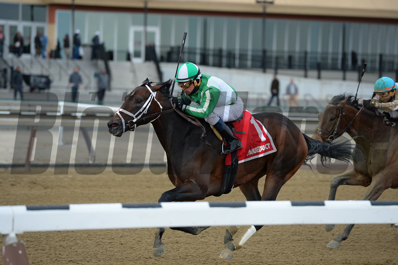 Haul Anchor wins the 2017 Gander Stakes<br /> Coglianese Photos/Joe Labozzetta