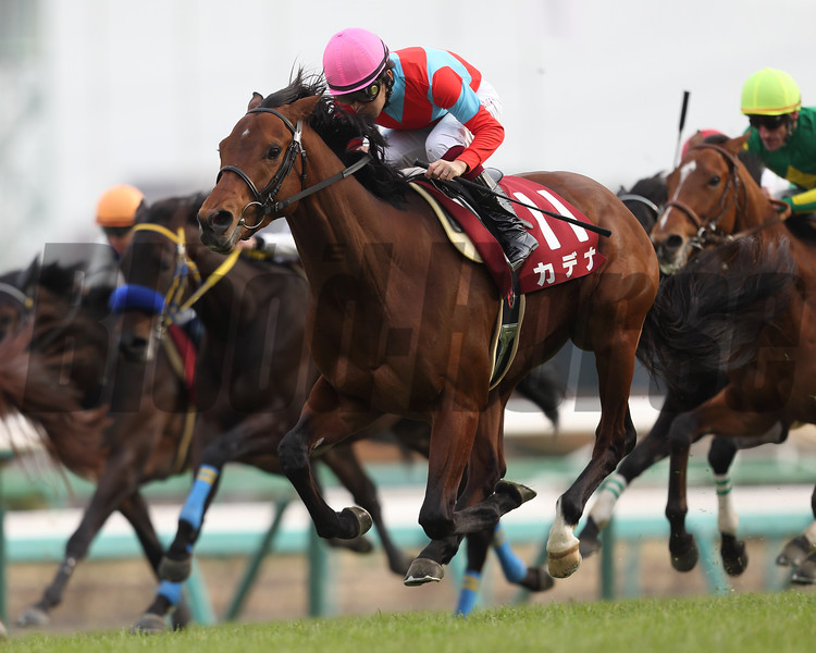 Cadenas wins the Hochi Hai Yayoi Sho (G2) at Nakayama, Japan on March 5, 2017.
