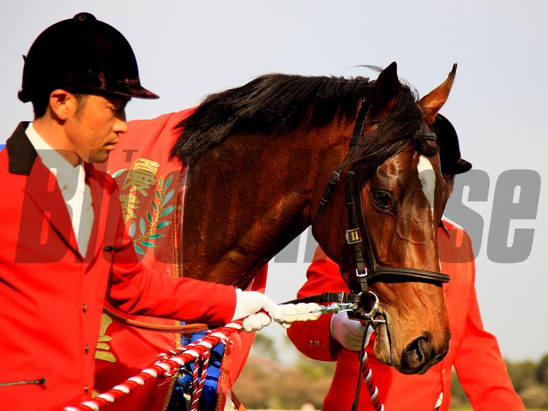 Al Ain wins the 2017 Satsuki Sho<br /> Naoji Inada Photo