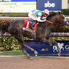 Arrogate wins the 2017 Pegasus World Cup<br /> Coglianese Photos/Alysse Jacobs