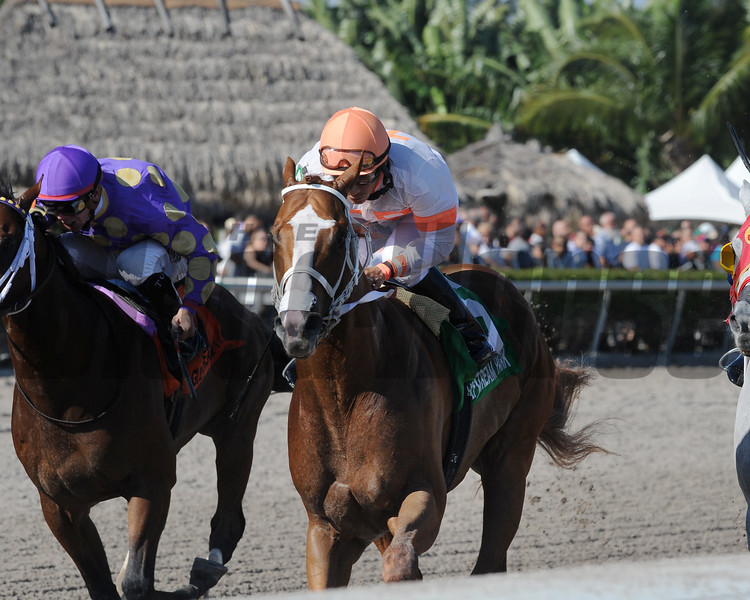 Early Entry wins the 2017 Sunshine Millions Sprint Stakes<br /> Coglianese Photos/Kenny Martin