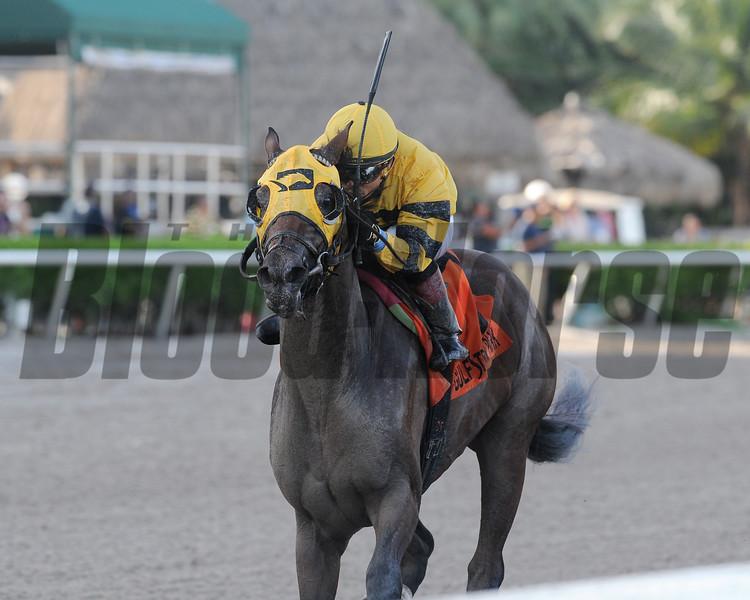Soutache wins the 2017 FTBOA Florida Sire Affirmed Stakes<br /> Coglianese Photos/Kenny Martin