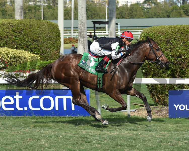 Celestine wins the 2017 Honey Fox Stakes<br /> Coglianese Photos/Leslie Martin