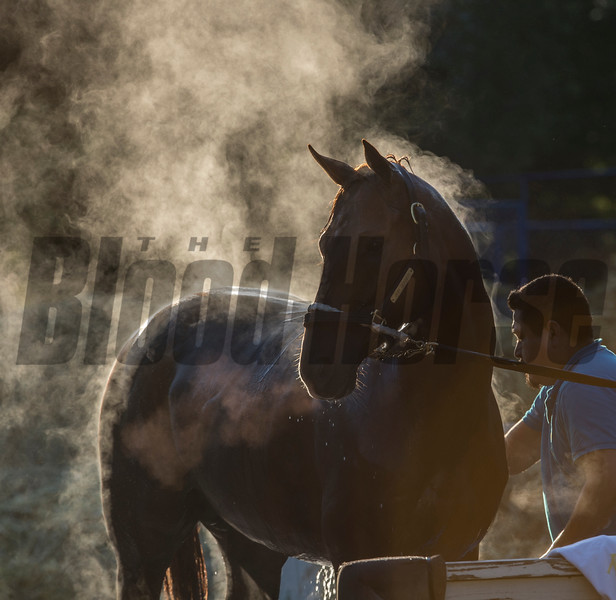 Gun Runner, an expected entrant in the Whitney Stakes gets a bath at the Oklahoma Training Center after his final work in preparation for the Grade 1 Whitney Stakes Sunday July 30, 2017 at the Saratoga Race Course  in Saratoga Springs, N.Y. (Skip Dickstein