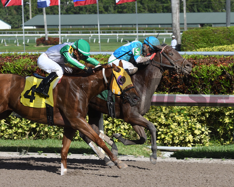Prospective Diva Maiden Win, Gulfstream Park, December 7, 2017<br /> Coglianese Photos/Lauren King